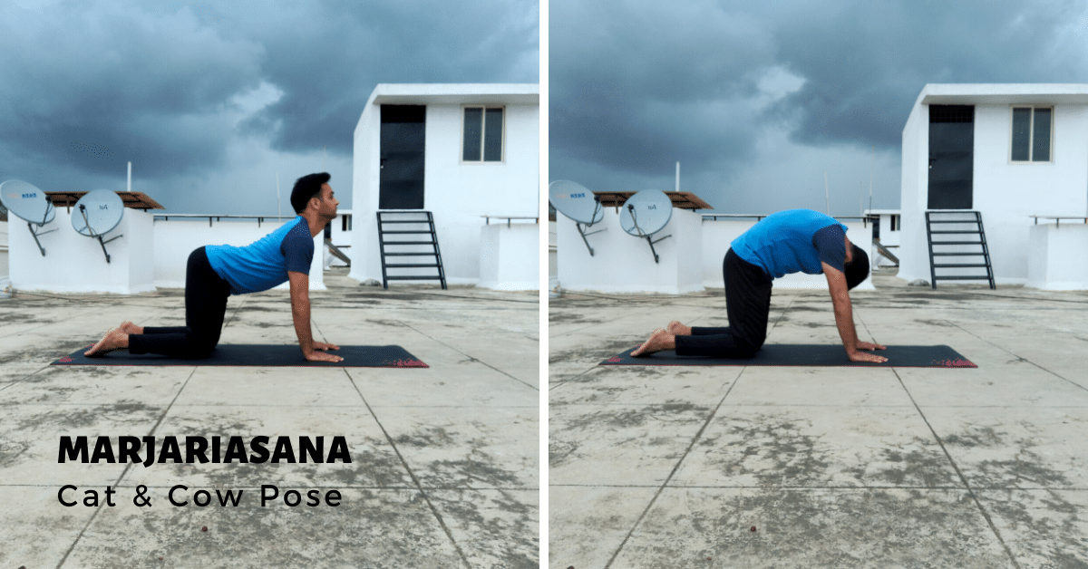 Marjariasana - Cat and Cow Pose - Yoga with Ankush