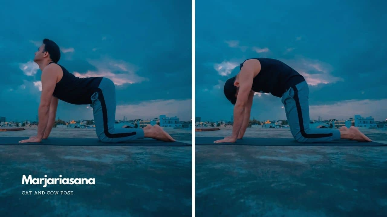 Marjariasana or Cat and Cow Pose